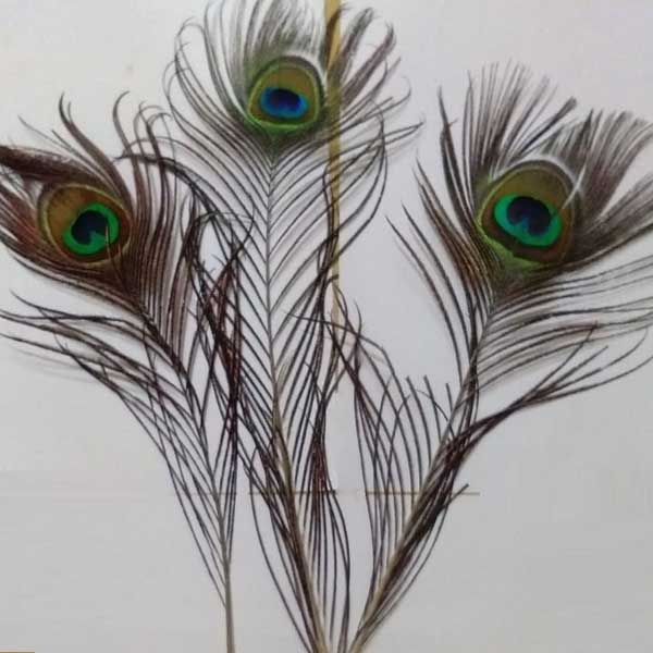 Peacock Feather 3 Nos Set pooja products